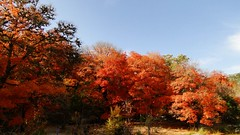 Lost Maples 22 (anne's passion) Tags: wow1 wow2 holycreationsofnature universeofnature thenaturalworldofnature