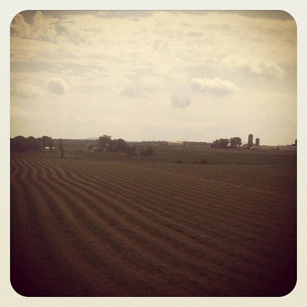 Le temps de la récolte