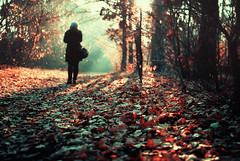 pushing homeward (ewitsoe) Tags: autumn cold fall leaves 35mm nikon europe seasons poland crisp chilly poznan d80 swarzedz nearfreezing goinghomequickly