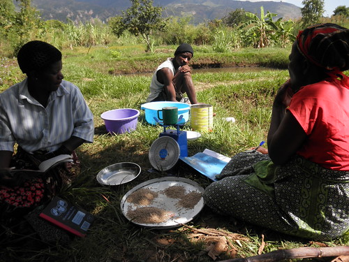 Calculating fish feed, Somba Village, Zomba, Malawi. Photo by Asafu Chijere, 2010