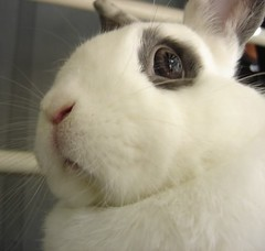 disapproving bunny (janetzep65) Tags: lighthouse lilly millcreek chincoteague tuxy fenwickmines nitrowv marchapril2012