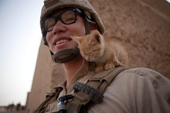 [Free Image] Animals, Mammalia, Cat, War / Armed Forces, Kitten, Soldier, United States Marine Corps, 201110061700