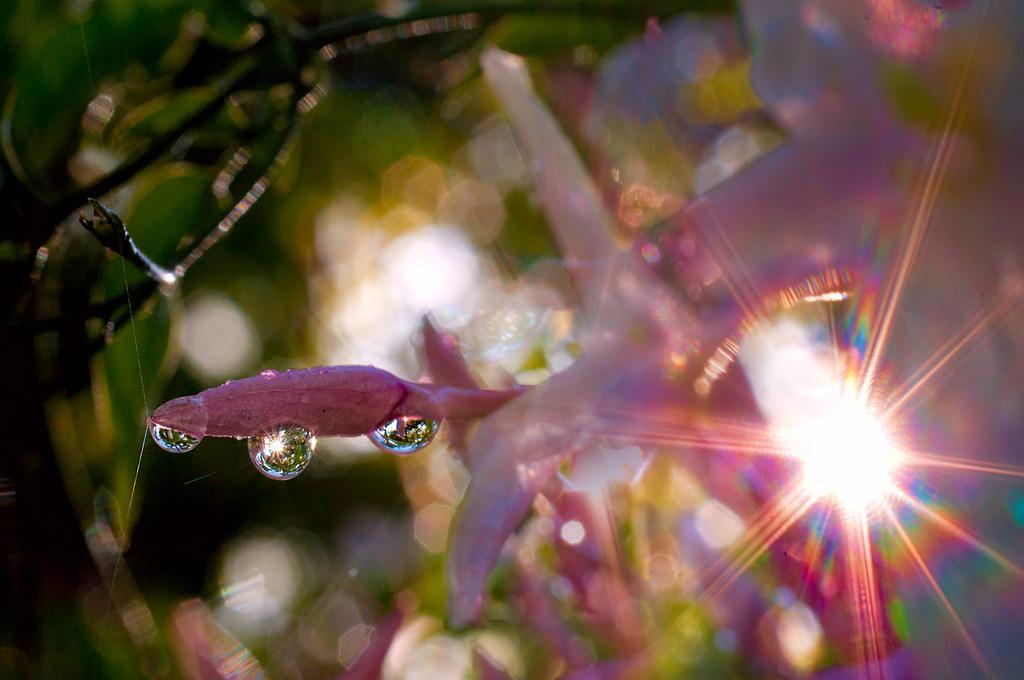 Sun and Waterdrops © Harold Davis