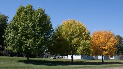 Fade Into Fall