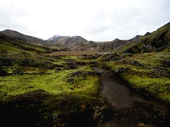 in Landmannalaugar