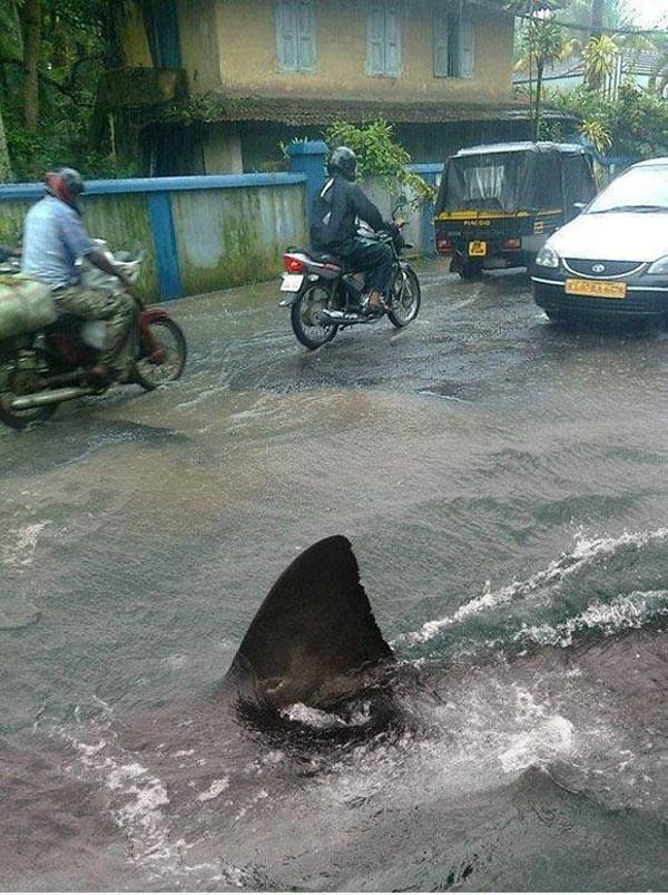 street-shark
