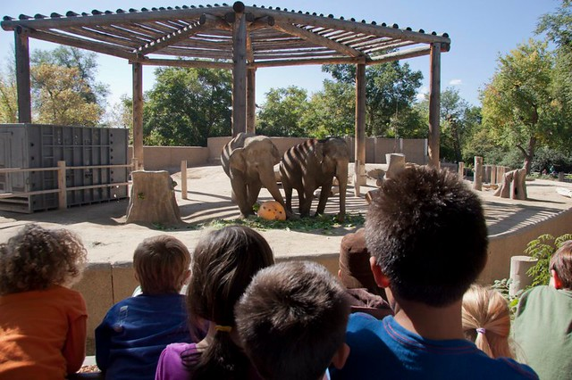 Слоны и тыквы (зоопарк Дэнвера)