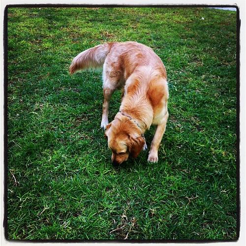 De paseo con #lola