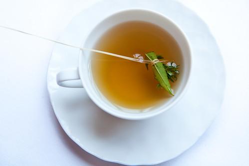 Mushroom tea broth