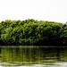 Mangroves-17