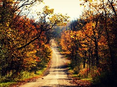 Surrounded by Beauty (MSVG) Tags: road autumn ontario canada fall inglewood shelbourne