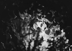 Buscando la luz (Ikuspuntuak) Tags: trees bw white black blanco luz rboles negro natura bn paseo contraste vieta bizkaia juanjo sombras euskalherria zuhaitzak basauri paseoberria sug3a ibiltzen kaletikibiltzen paseoan ikuspuntuak kaletik