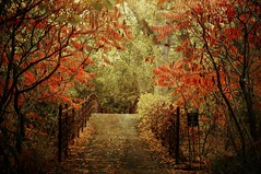 Forlorn Bridge (Eric Vondy) Tags: bridge autumn red fall texture leaves yellow wisconsin forest madison wow1 dblringexcellence tplringexcellence artistoftheyearlevel2 eltringexcellence