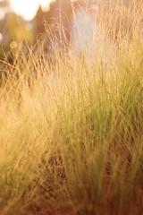 Bokeh Grass