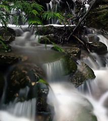 Fromme Forest Falls (Christopher J. Morley) Tags: autumn vancouver creek forest walk olympus hike waterfalls northshore cascades e3 fromme wanderung 2011 lotsofwater ilikemyrubberboots