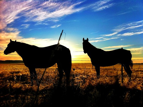 "Horses at Sunrise - Wyoming • <a style=""font-size:0.8em;"" href=""http://www.flickr.com/photos/20810644@N05/6311924044/"" target=""_blank"">View on Flickr</a>"