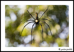 Spider (gautam023) Tags: macro bug insect spider vasaifort