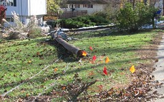 Pole Down (blazer8696) Tags: new railroad autumn winter snow storm haven halloween burlington river northampton day branch connecticut nine snowstorm ct 9 rail trail freak damage alfred day9 daynine hartford farmington noreaster railtrail 2011 frt nhnh img5231 t2011