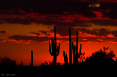 Sweet Home Arizona!!! (Steve Flowers) Tags: sunset arizona cactus saguaro nikon70300mmlens nikond7000