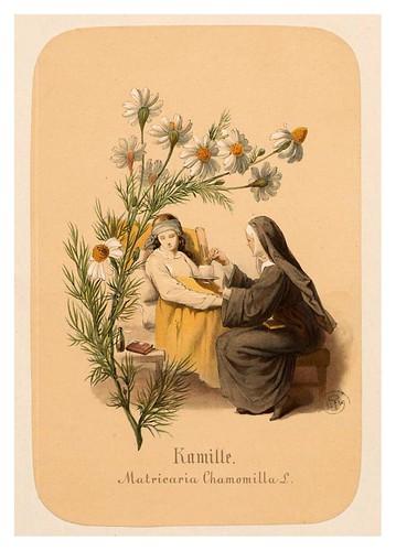 002-Manzanilla-Illustrirtes Kräuterbuch –Aquarelle- 1870-Adolf Schroedter