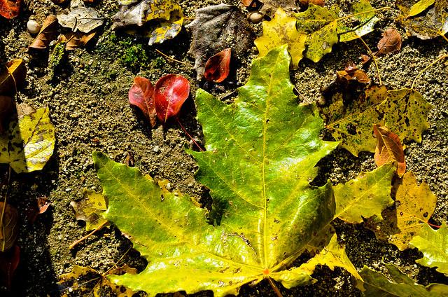 otoño 11