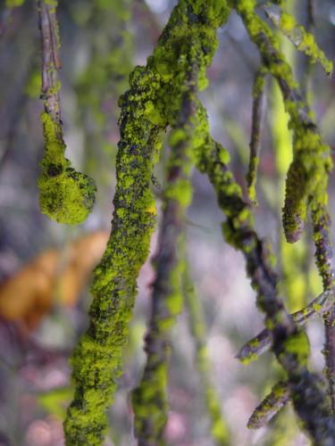 80s hipster lichen