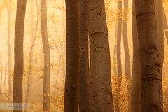 Orange Forest (Pavel Pronin) Tags: bulgaria vitosha   vitoshamountain vitoshanaturepark