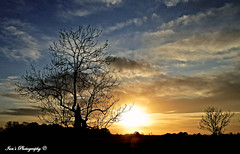 Silhouette,sky and trees. (Scooby ...) Tags: trees light england sky art nature beautiful beauty silhouette composition amazing interesting focus perfect colours time crystal creative sharp clear stunning arrangement goldenhour optics infocus artistoftheyearlevel2