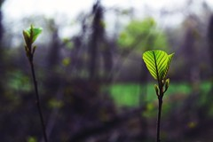 (kelly.grace) Tags: nature leaves forest 50mm woods nikon bokeh farm d3100