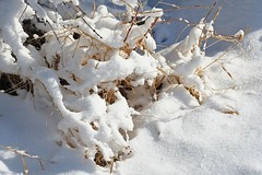 snow-laden and sunlit