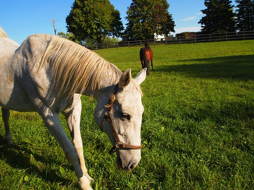 road trip - horses