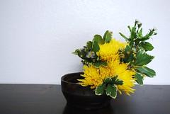 Fall (sansaistudio.com) Tags: fall ikebana chrysanthemum japaneseflowerarrangement misyoryu