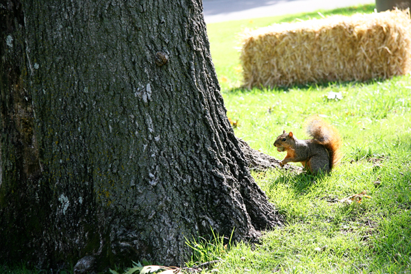 Squirrel at Philbrook