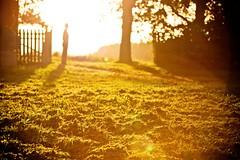 Stand alone (E y e V i s i o n) Tags: wood light sky sun tree nature sunshine silhouette forest estonia ray shine blind bright flare straight eesti