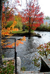Autumn in Tilton, NH (catchesthelight) Tags: blue autumn trees light red sky orange plants green fall colors beauty leaves yellow flora nh fallfoliage colourful itsmulticolored tiltonnh fallfoliagephotography