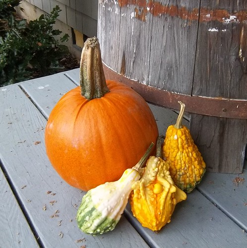 pumpkin gourds 10.12.11