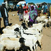 Cattle market - Somaliland