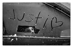 Big Love (wunderbilder) Tags: auto dog love car frost hund reif