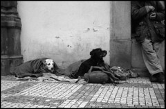 Two Dogs, Mal Strana, Prague (tpeltan) Tags: street blackandwhite bw dog prague homeless eu smichov czechrepublic rodinal minoltahimaticf ilfordpan100 fomadonr09