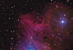 pelikan-3- anden-beh (nive1964) Tags: canon eos 1000 Astrometrydotnet:status=solved Astrometrydotnet:version=14400 Astrometrydotnet:id=alpha20111122800479