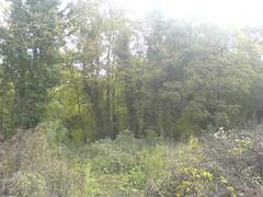 Bois des anciennes carrières de Romainville (93), le 25/10/2011