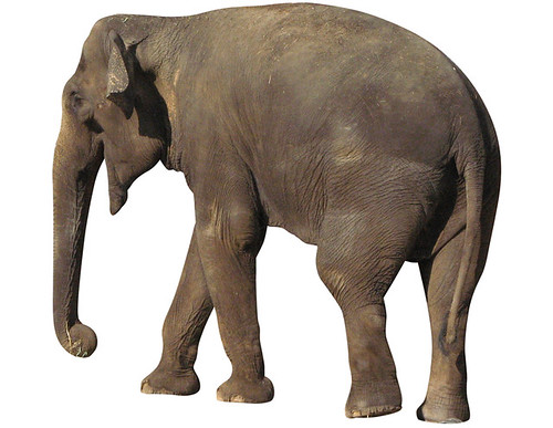 fabadiabdenas_elefante_1