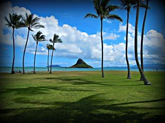 ~~Waimanalo Beach State Recreation Area #3~~ (TravelsThruTheUniverse) Tags: tropicalplants exoticgardens coconutpalms oahuhawaii tropicalgardens tropicalfoliage subtropicalgardens tropicallandscapes subtropicallandscapes