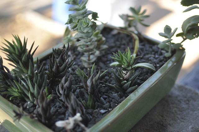 raina's planter