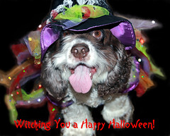 Happy Halloween! (Explored) (faith goble) Tags: dog cute halloween hat tongue happy costume video furry dress witch kentucky ky cc creativecommons cockerspaniel bowlinggreen spangles 2011 youtube explored firsthand faithgoble patrickgoble gographix faithgobleart thisisky