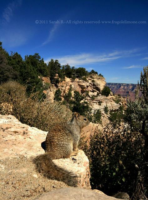 Grand Canyon 3 blog