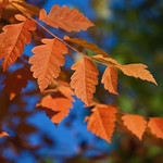 Autumn leaves thumbnail