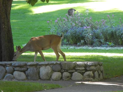 Lithia Park, Ashland, Oregon _ 6166