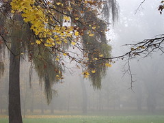 autumn fog (ela_s) Tags: park autumn fog canon krakow explore s90 jesień mgła parkjordana
