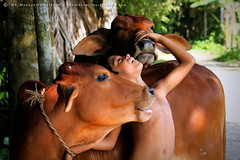 Beloved. (mostakim timur) Tags: friends love nature canon eos cow is kiss village child natural candid muslim islam eid domestic bangladesh efs beloved ul sacrifice adha x3 500d 2011 eidaladha eiduladha barisal borisal 55250mm muladi t1i ediuladha maulatal